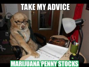 animal marijuana memes advice Dog