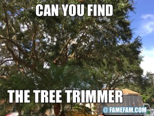 Find the tree trimmer