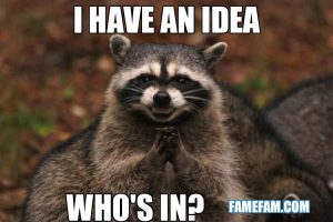 Racoon Animal Memes Funny